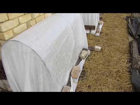 видео: Рання высадка рассады в парник...