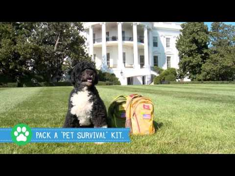 Get Prepared with Bo and Sunny