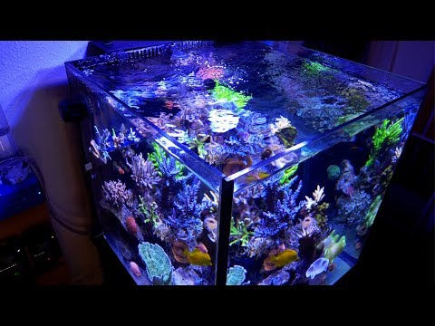 Vlog 12: Polishing up the Reef Tank at Home