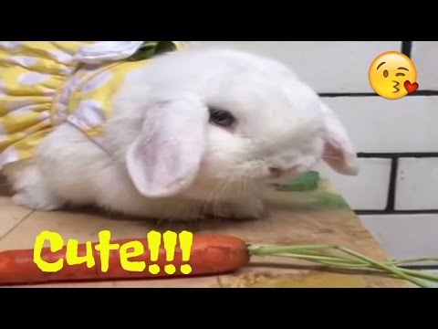 """""""Who Framed-up these Rabbits?"""" - Get To know Them More ][ Cutest Pet"""
