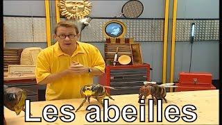 Différence Entre Abeille Et Guêpe Photo