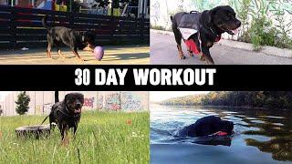 Rottweiler  30 Day Workout