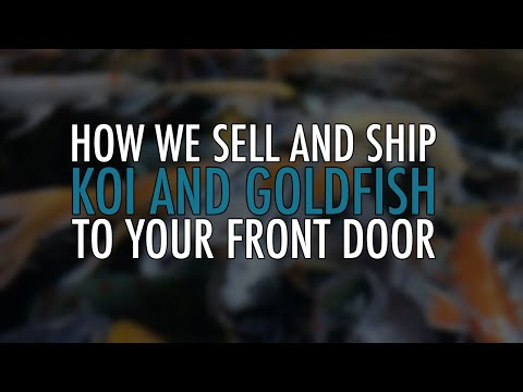 Purchasing and Shipping Live Fish From NextDayKoi.com