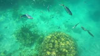 Catalina Island Snorkeling April 2018 (Isla Catalina) Dominican Republic