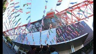 東京都港区の東京タワーで16日、端午の節句を前に333匹のこいのぼ...
