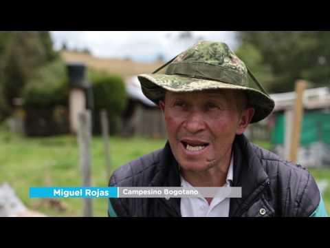 Cultivos en Chapinero