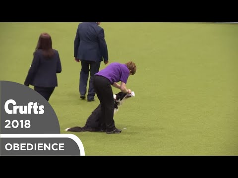 Inter-Regional Obedience - Class C Scents - Part 1 | Crufts 2018