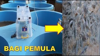 Cara Budidaya Ikan Lele Dengan Sistem Bioflok Bagi Pemula