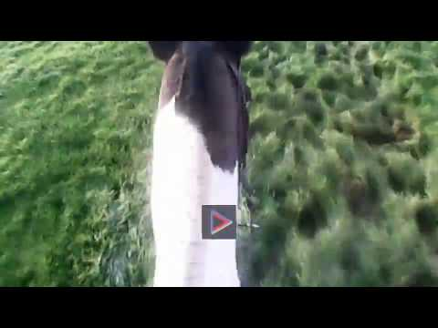 North Galway Hunt (Kilbeg)