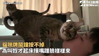 貓咪牌鬧鐘按不掉  為叫奴才起床摸嘴蹭臉樣樣來
