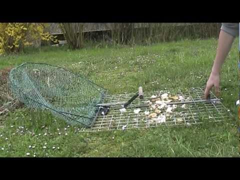 Piege A Oiseaux Pour Pie Youtube