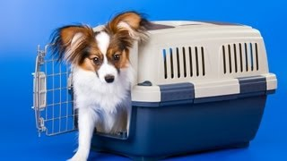 Dog Training: Teaching Your Dog To Enjoy The Crate