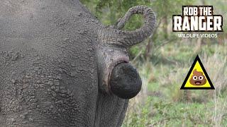 White Rhino Taking A Toilet Break