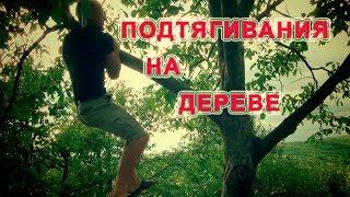 Подтягивания на дереве - ЧЕМ ЗАМЕНИТЬ ПОДТЯГИВАНИЯ, ЕСЛИ НЕТ ТУРНИКА