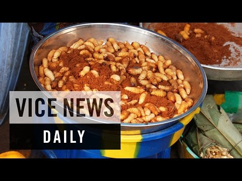 VICE News Daily: Congo's Bug Farmers Fight Hunger