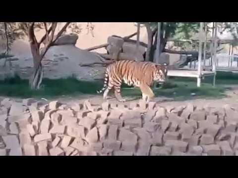 حديقة الحيوانات بالملز الرياض Riyadh Zoo Youtube