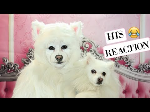 I Transformed into my Dog( HIS REACTION)
