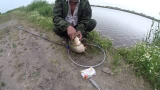Рибалка Ж. Ж. А. Р. № 3