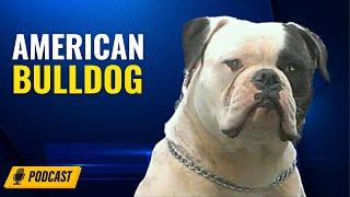 Episode 72: American Bulldog (bully type)  Martin Gonzalez Arceo from Fuerza American Bulldogs
