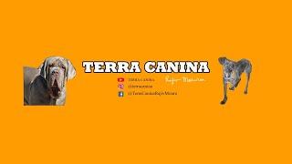 CONHECENDO OS AMIGOS E AMIGAS DO TERRA CANINA! thumbnail