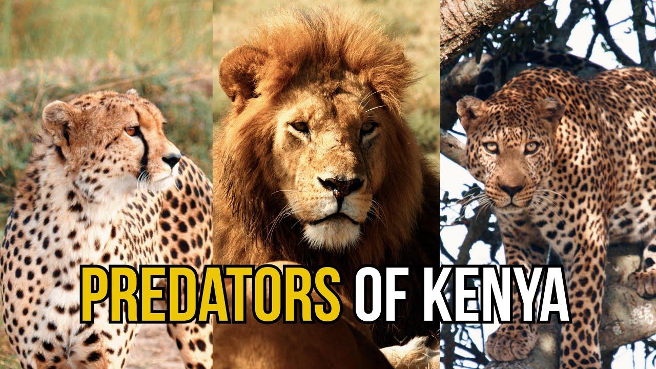 Predators of Kenya - Dean Schneider