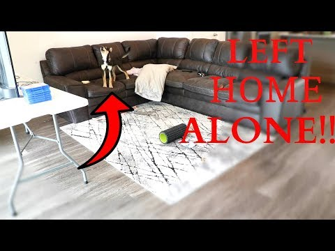 LEAVING MY GERMAN SHEPHERD HUSKY HOME ALONE!!