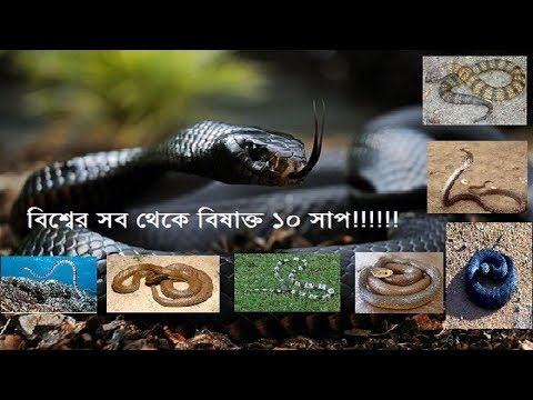 Did you know these snakes? l Snake l Ajaira Production