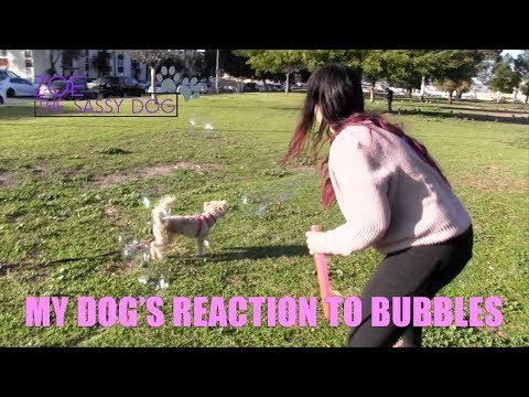 MY DOG'S REACTION TO BUBBLES (FUNNY)