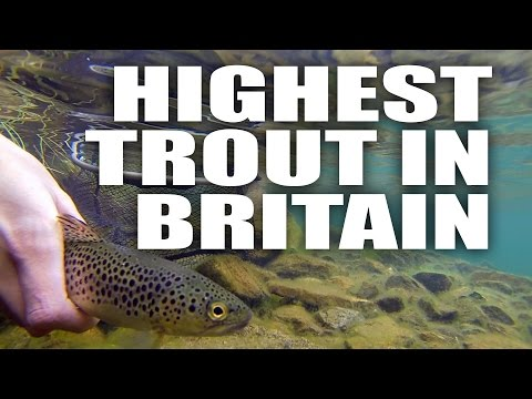 Is This The Highest Trout In Britain - Fly Fishing - Andy Buckley