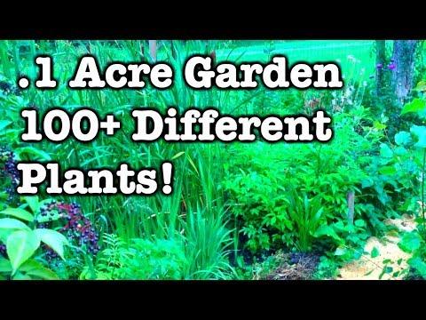 .1 Acre Garden - Summer 2017 Update
