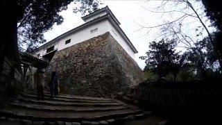 桜と彦根城2016