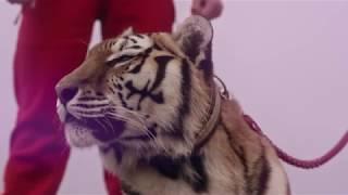 Клип клуба самбо «Слава» на песню «Кукушка»  в исполнении Дарьи Волосевич