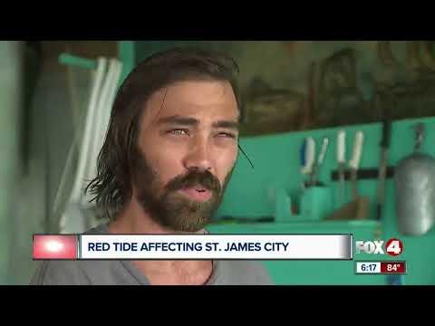 Red Tide Fish Kills Reach St. James City