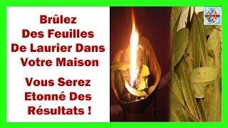 Brûlez Des Feuilles De Laurier Dans Votre Maison - Vous Serez Étonné Des Résultats !