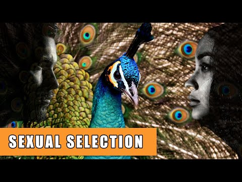 Sexual selection sexual dimorphism and plant phylogeny