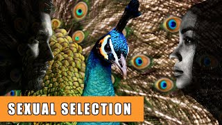 In humans selection Sexual