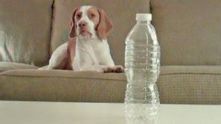 Dog Loves Water Bottles:  Cute Dog Maymo