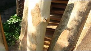 видео Забор из необрезной доски своими руками: фото