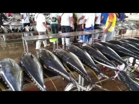 It's more fun in the Philippines: Largest Tuna Import/Export and Scuba Diving VLOG 6