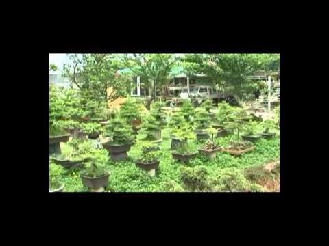 Kỹ thuật trồng cây và chăm sóc cây cảnh - Phần 1