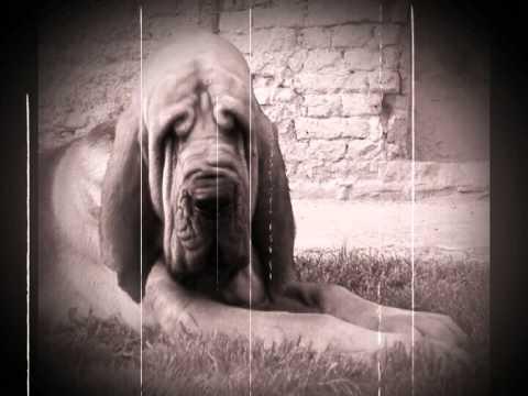 Bloodhound Gang - Kids in America
