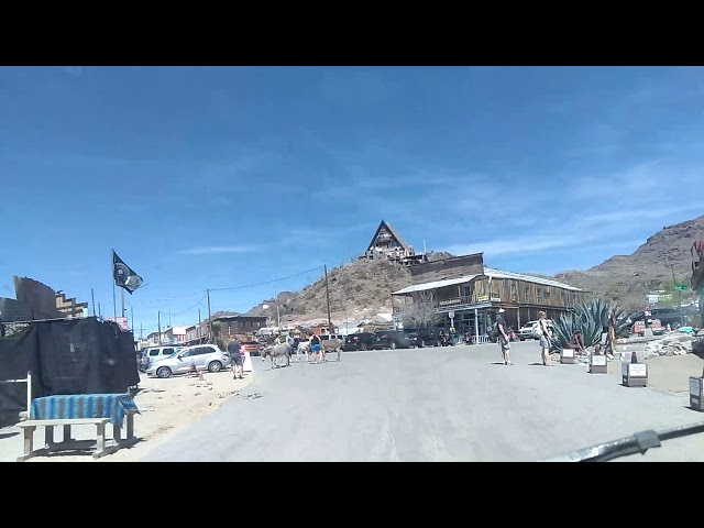 Welcome to Oatman Arizona