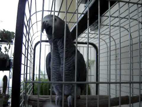 Jákó papagáj kalitka