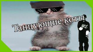 Танцующие коты   Mlg