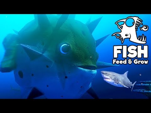 Feed and Grow Fish Gameplay German - Kugelfisch OVER 9000