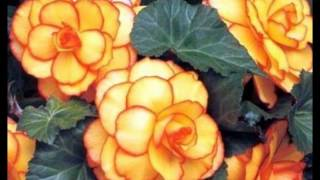 Eddie Kendricks -=- 08 Trust your Heart [1974]