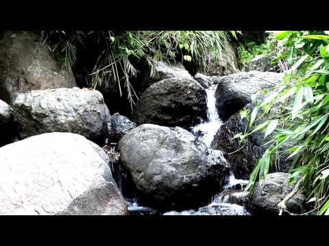 Beautiful stream scene nature sounds crickets South Pacific Vlog