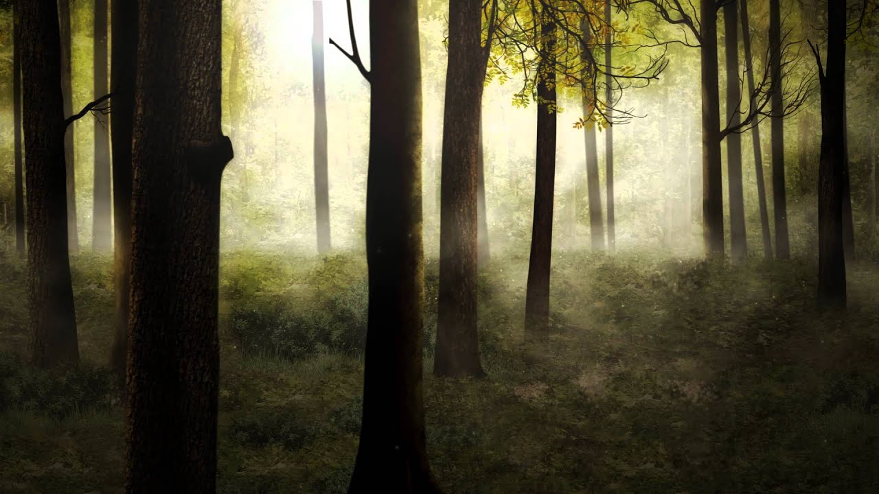 Fondo Video Background Full HD Forest Morning Bosque YouTube