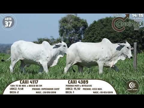 LOTE 37   CAXI 4117, CAXI 4389