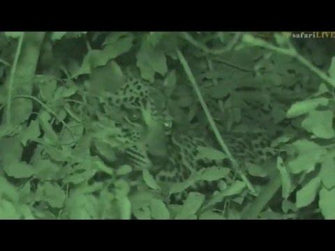 Pt 2 Safari Live's Sunset Safari Drive at 4:30 PM on May 05, 2017 ( Hosana )